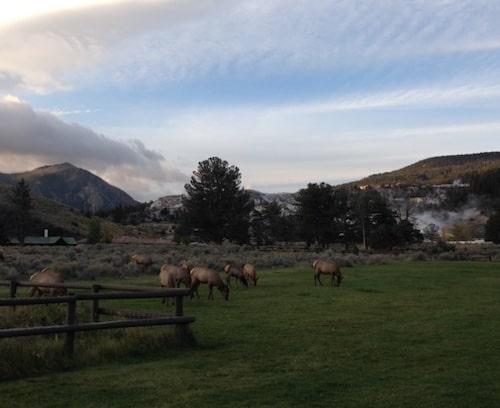 Hannah-Jaicks-The-West-Revisited-Bugling-Elk