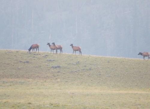 Hannah Jaicks_Country Roads_Elk In The Mist