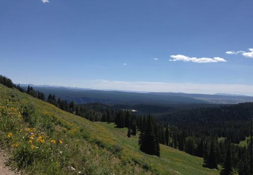 Hannah Jaicks_To Montana With Love_wildflowers