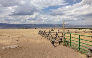 greater yellowstone summer 2013