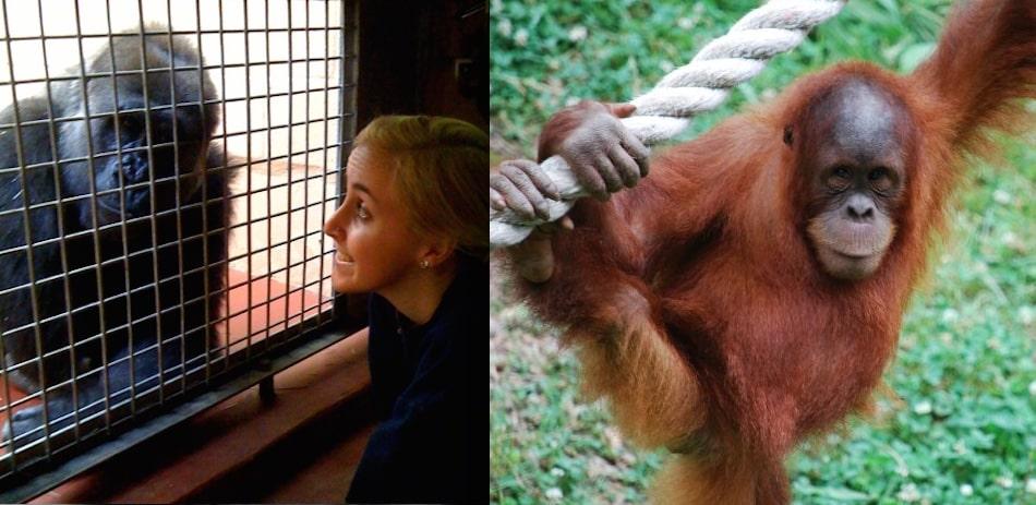 hannah jaicks animal archive zoo atlanta animals
